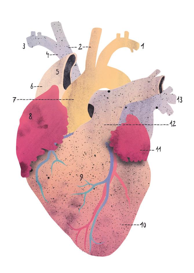 Anatomie - Carolin Eitel